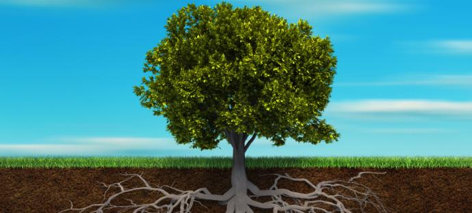 Proč se říká kořen? Jaký je původ slova kořen?