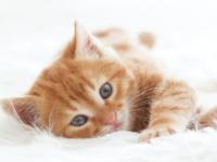 Jaký je původ slova kočka? A jak se ze slova kočka stala kocovina?